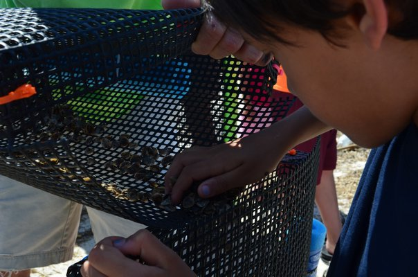 Mikhil Talwalkar scrapes baby oysters into his crate. Alexa Gorman