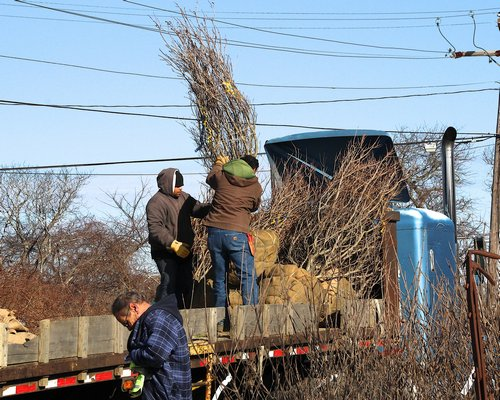 Workers at Fort Pond Native Plants in Montauk.   KYRIL BROMLEY
