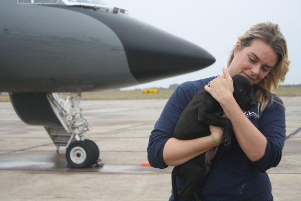 Kate McEntee, adoptions director for he Southampton Animal Shelter Foundation, with one of the puppies from El Faro de los Animales, a shelter in Humacao, Puerto Rico, that was leveled by Hurricane Maria. The animals arrived on a chartered flight to Gabreski Airport in Westhampton Beach on Sunday. CAILIN RILEY