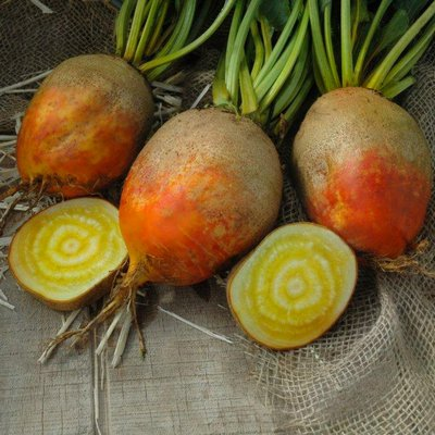 Touchstone is a golden beet that matures in 55 days with uniform round and smooth roots that are orange with a dazzling golden vivid interior. The sweet flesh was noticeably better than other gulden's in field trials. COURTESY NGB