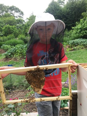 Colin Heaney holds a frame the bees have just started building comb on. LISA DAFFY