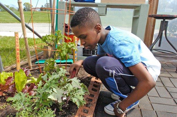 Fifth grade Hampton Bays Middle School student Elijah Amos tends to plants in the greenhouse.  DANA SHAW