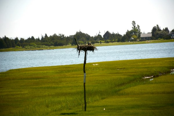 Nesting ospreys and migratory birds can be watched from the house. JD ALLEN