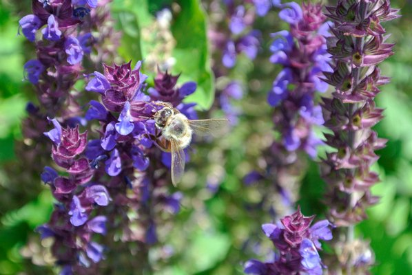 This is the time of year when bees become active again. DANA SHAW