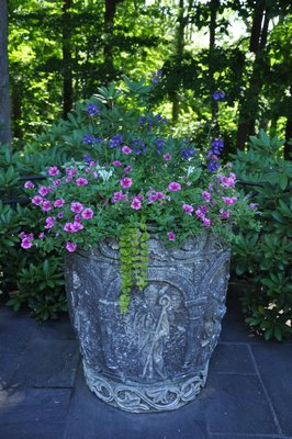 The petunia-like starred pink-purple flowered Calibrachoas draw your attention to this planter while four other varieties of plants provide height, color and a trailing tease. ANDREW MESSINGER