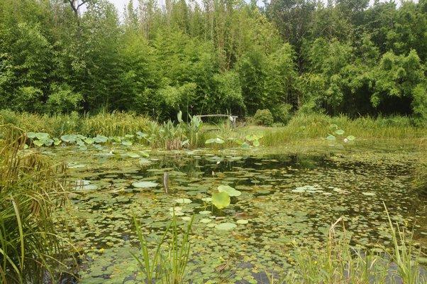 Scenes from Andrew Sabin's organic garden in Amagansett. MICHELLE TRAURING