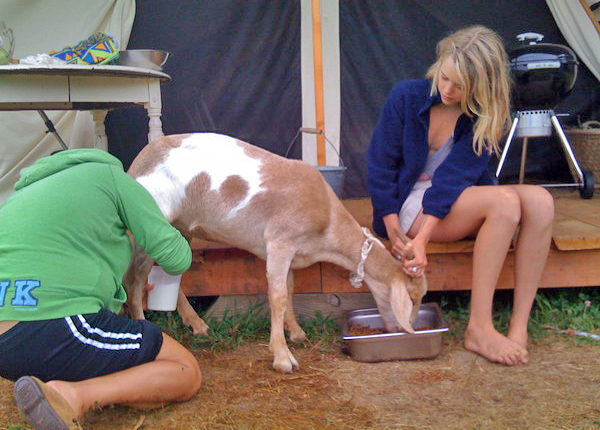 Karen Sanchez and Sylvia Channing learned to milk goats for their Ross School senior project.