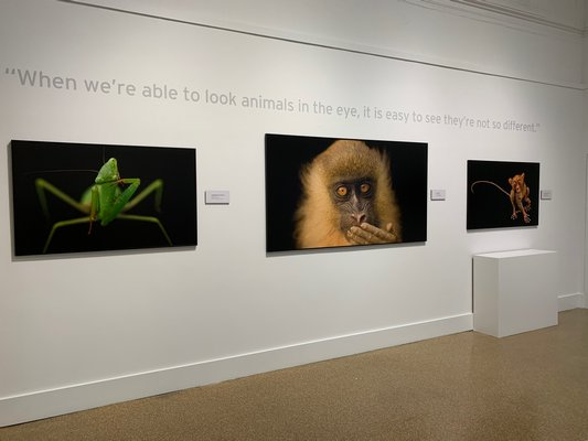 The National Geographic Photo Ark exhibition installed at the Southampton Arts Center. ANNETTE HINKLE