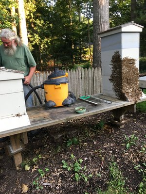 Bee-vac LISA DAFFY