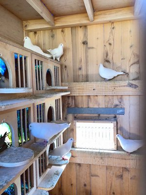 interior of pen showing nesting boxes ANNE SURCHIN