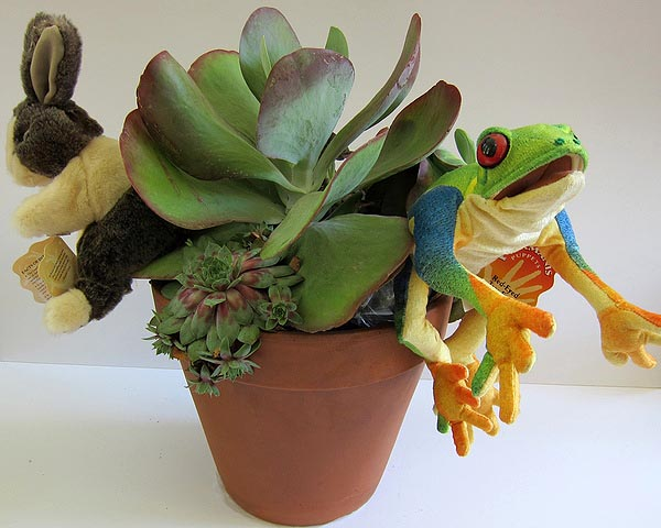 Live succulents with rabbit and frog hand puppets by Michael Grim of Bridgehampton Florist. COURTESY ALEXANDRA EAMES