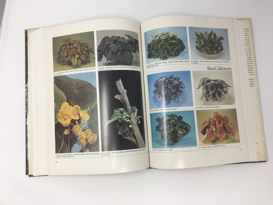 Begonias: The Complete Reference Guide