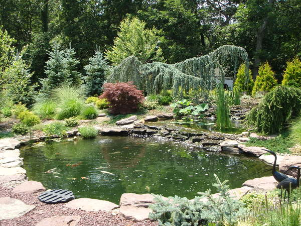 A nearly 60,000-gallon estate koi pond featuring over 200 imported and domestic koi in Nissequogue. COURTESY AQUATIC HABITATS