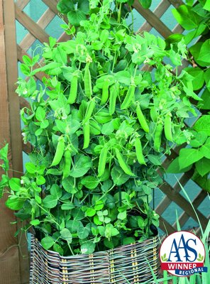 Patio Pride is a fast and early pea that matures in only 40 days and can be grown in pots on balconies, window sills or as a very early garden pea. COURTESY AAS
