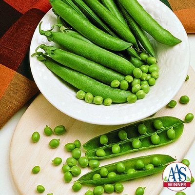 Mr. Big is an English or garden pea that was bred for its large pods and high yields. The large pods are easy to shell and the plants often produce two pods per node. Vines reach 2 to 3 feet, mature in about 60 days and need vertical support. COURTESY AAS