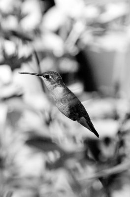 """Beautiful Flora""  MARIA BOWLING"