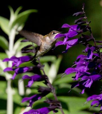"""""""Feeding Flora""""  MARIA BOWLING"""