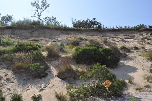 Native plants.  Elizabeth Laytin