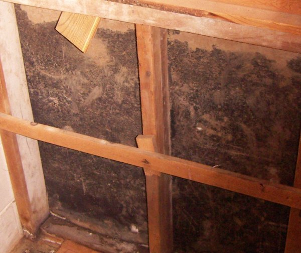 Hidden mold inside wall cavities. COURTESY BRAD SLACK