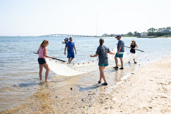 Christine Santora, Stony Brook University School of Marine and Atmosphere Sciences,  shows teachers how to seine fish from the beach.