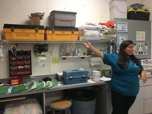 Maxine Montello shows the crash kits for all animals treated by NYMRC and the taging kits for the sea turtles that will be released on August 9.
