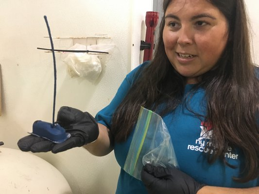 Maxine Montello shows the tracker that will be attached to the shell of 5 of the turtles released this summer. The center hopes to be able to livestream the turtles movements in the future.