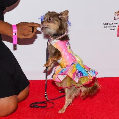 Barking Beauties contestant.