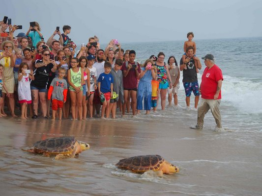 A sea turtle release of two turtles rehabiliated by NYMRC, fomerly The Riverhead Foundation.