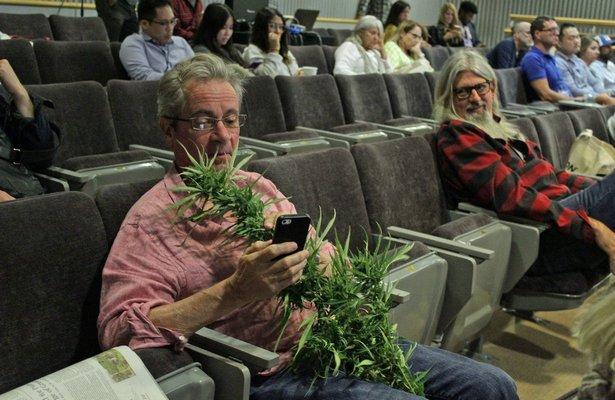 Stephen Hamilton with a hemp plant.