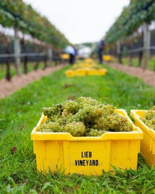 Lieb Vineyards
