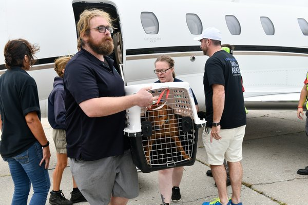 Volunteers and staff from ARF as well as the ground crew at Sheltair unload the dogs.