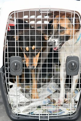 Twenty dogs were brought to Long Island from the Bahamas on Thursday, September 12.
