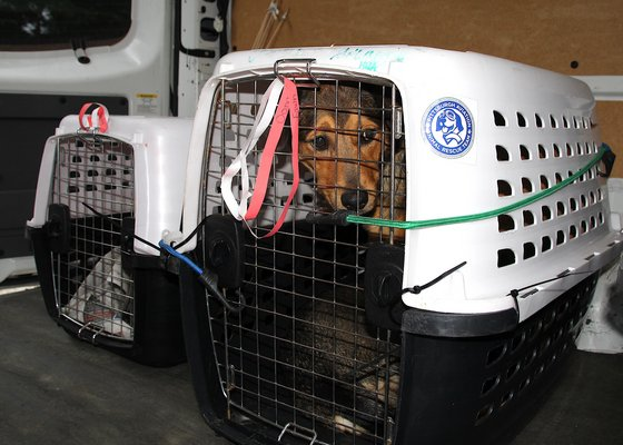 Dogs from the Bahamas arrive at ARF on thursday, September 12.