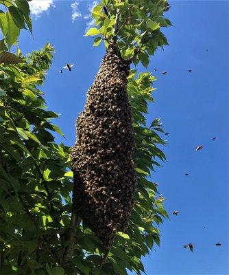 A swarm. BECKY JOHNSON