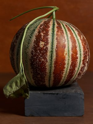 Kajari, a khandalak group melon, first introduced to the United States in 2015.