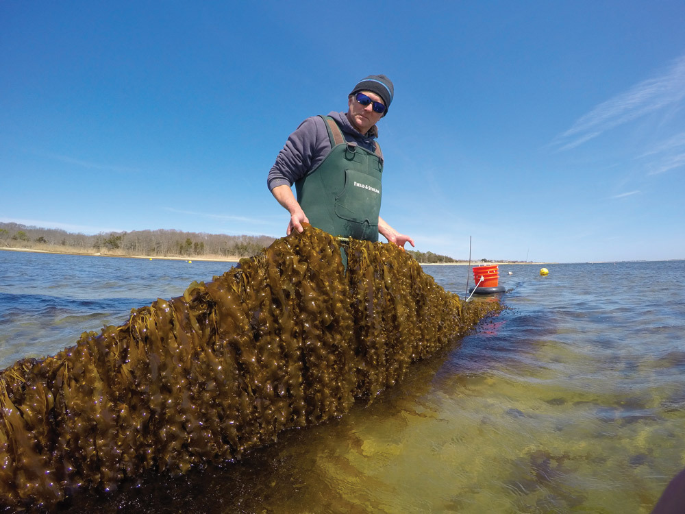 Mike Doall tending to the kelp farm in Southampton.