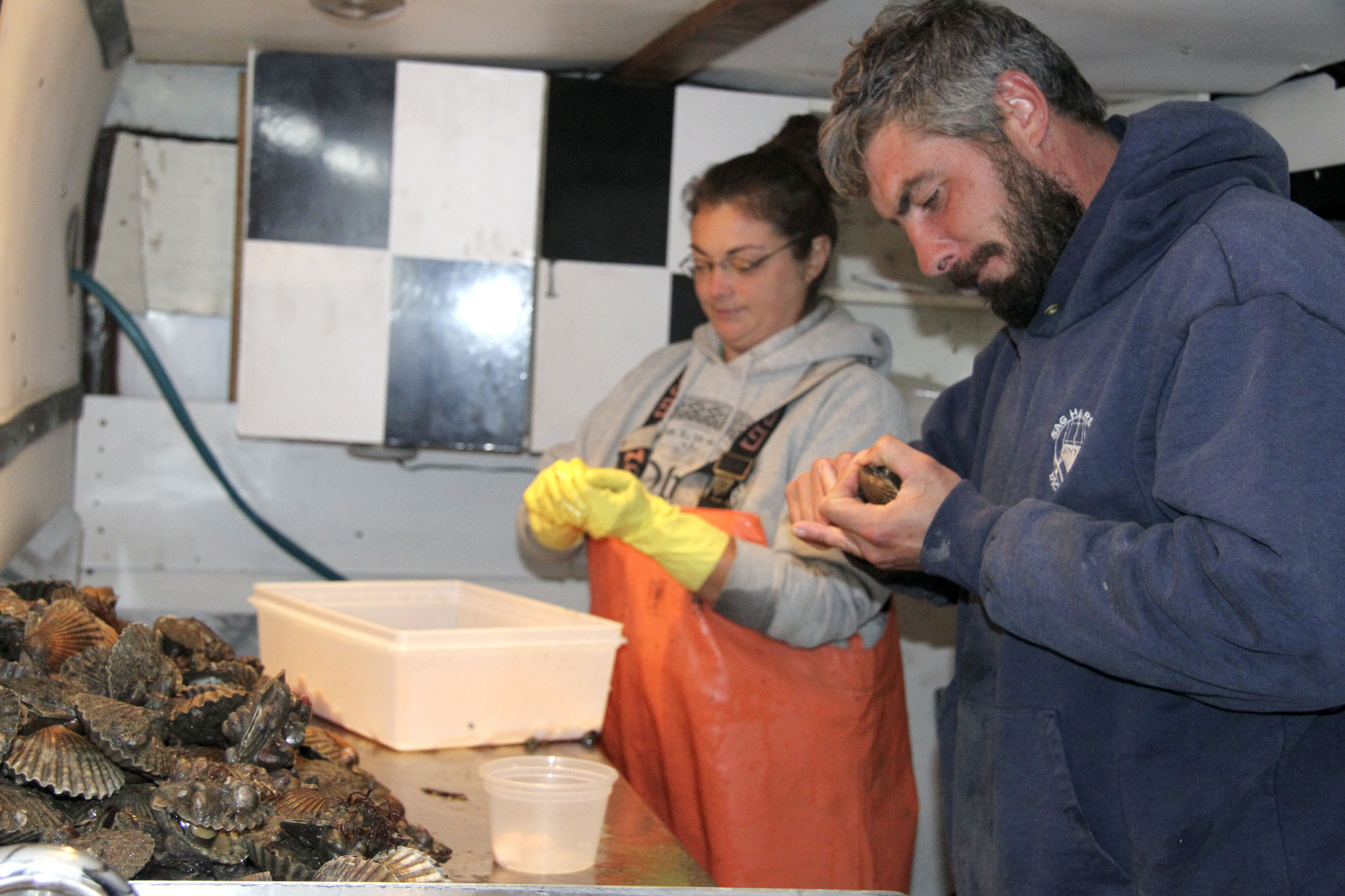Greg Verity and Sara Miranda shucking the scallops Mr. Verity caught in Orient last week. This year's scallop season has been grim due to a huge scallop die-off.  MICHAEL WRIGHT