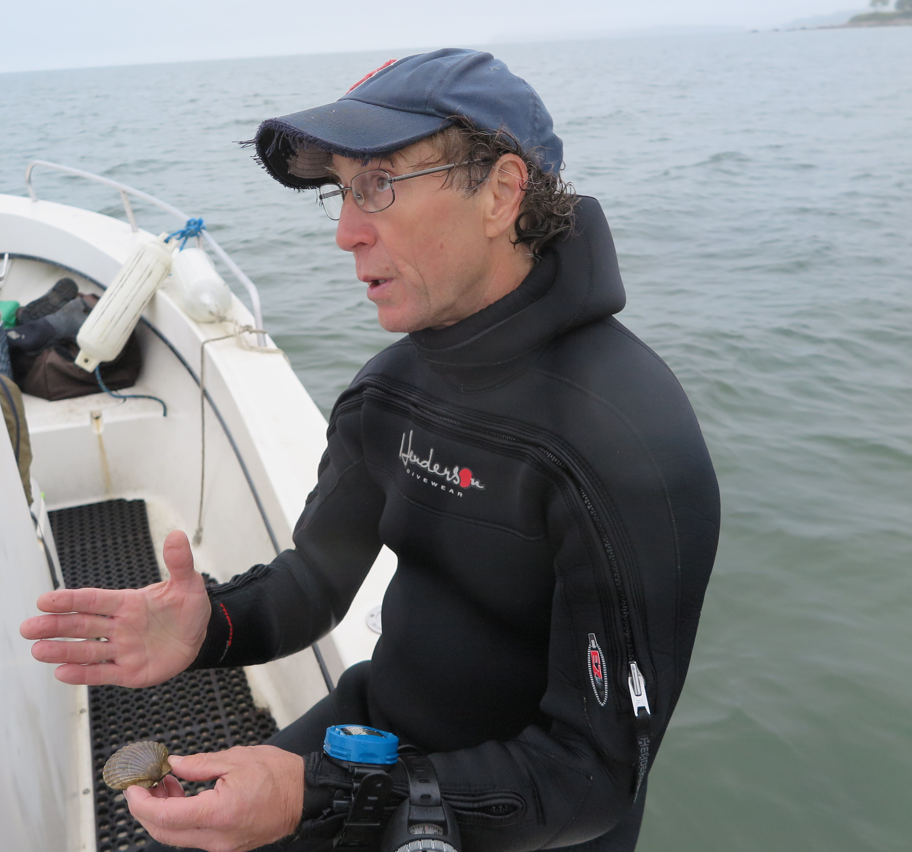 Dr. Stephen Tettelbach has been conducting bi-annual surveys of wild bay scallop populations for two decades. This year's surveys revealed a massive die-off of the scallops in the Peconics.