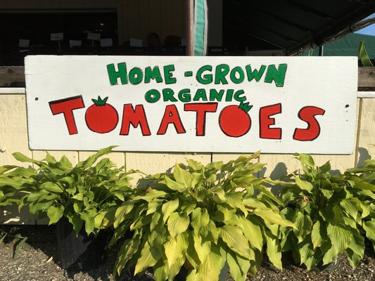 Tomatoes are the most commonly grown nightshade in home gardens. HANNAH SELINGER