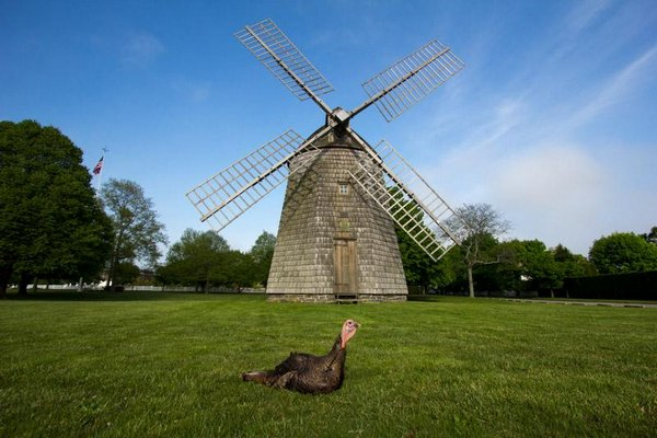 The Water Mill turkey BY Aleksandra Saland
