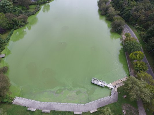 An aerial view of the blue-green algae bloom in Lake Agawam in Southampton Village on Monday.