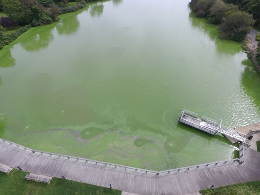 An aerial view of the blue-green algae bloom in Lake Agawam in Southampton V