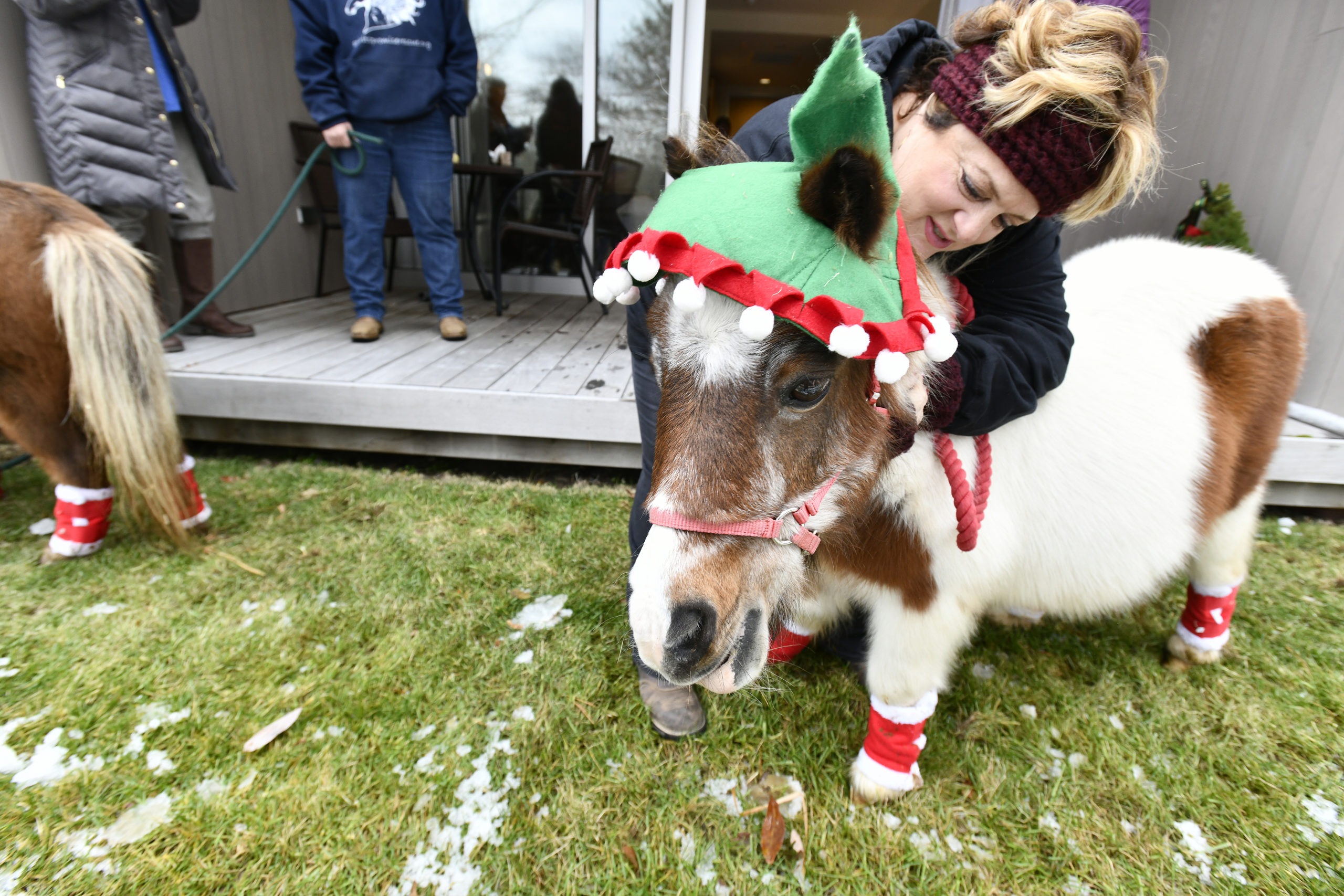 Marisa Striano President and CEO of Spirit's Promise Equine Rescue and Rehabilitation Program with the aptly named, Chritmas, the mini horse.   DANA SHAW
