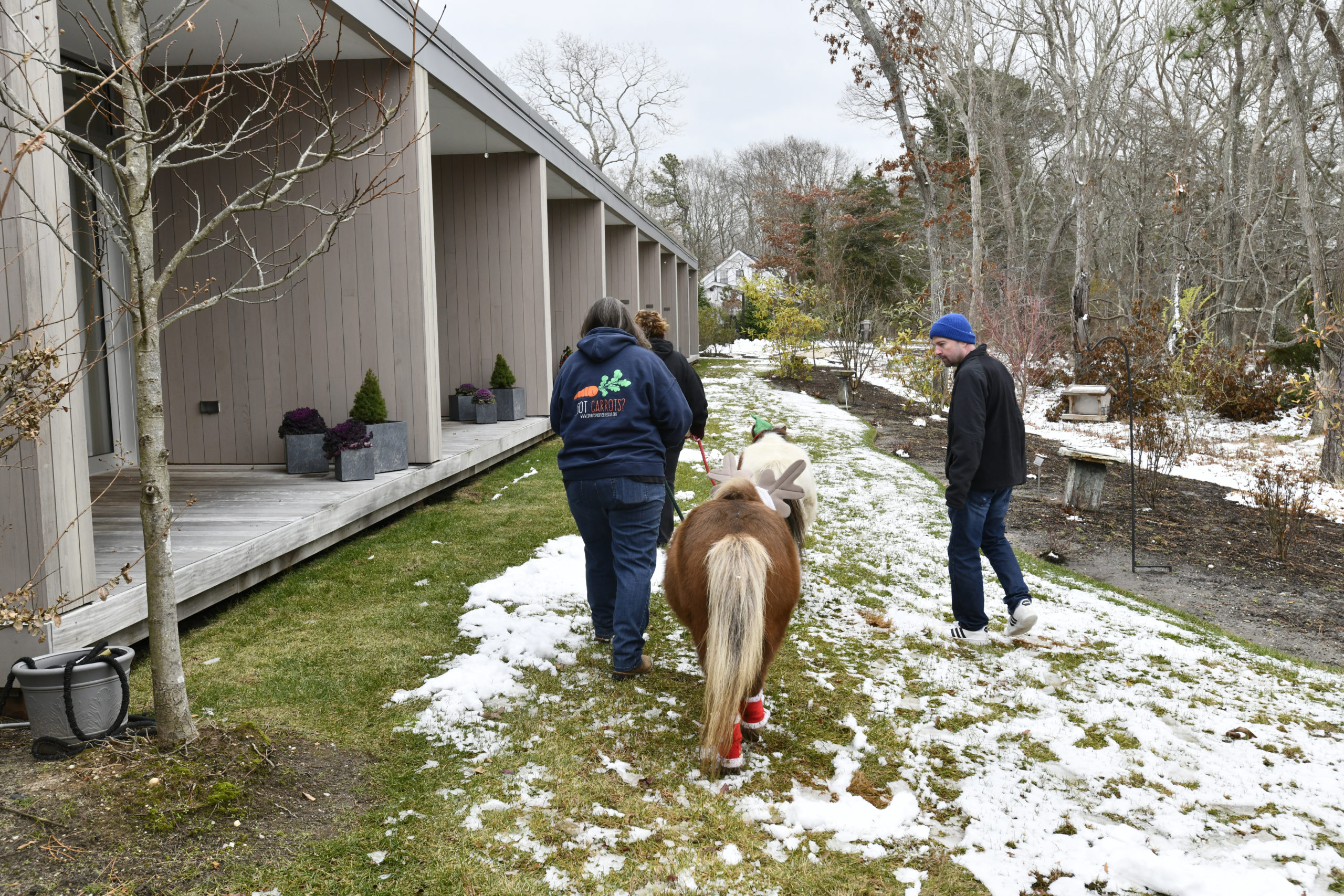 Mini horses Sweetie and Christmas from Spirit's Promise Equine Rescue and Rehabilitation Program in Riverhead paid a visit to Daniel Byrne at the East End Hospice Kanas Center for Hospice Care in Westhampton Beach last week. DANA SHAW