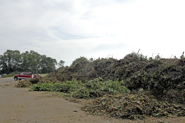 Large piles of brush cuased by Hurricane Irene at the jJackson Avenue transfer in Hampton Bays.