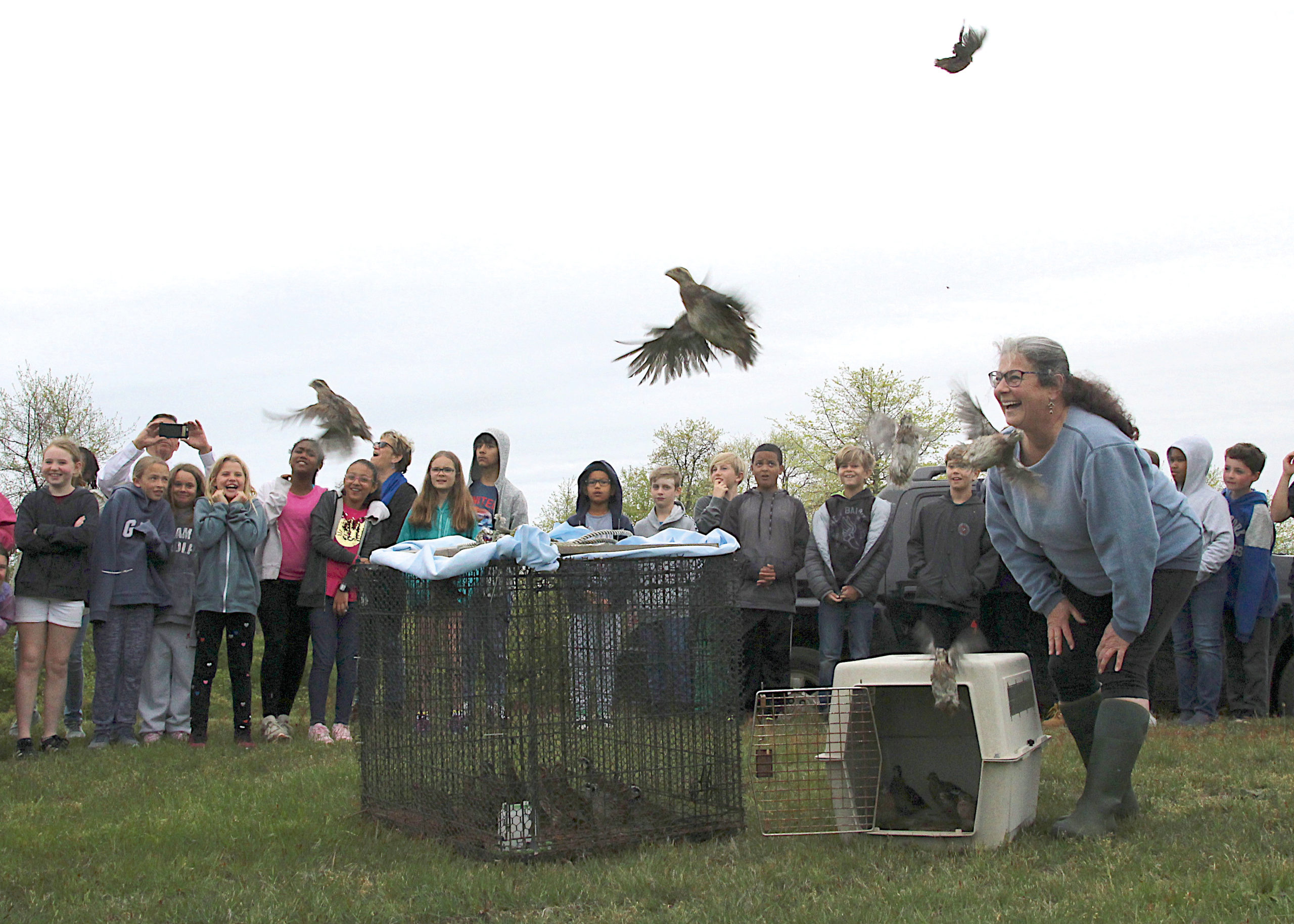 Fly Forth, Young Quail! May 29 -- Third House Nature Center hosted its first bobwhite quail release of the year in partnership with Montauk School science students.