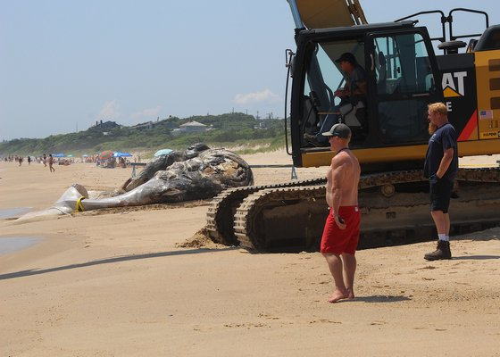 A deceased humpback whale was found off the shore of Montauk on Wednesday. On Friday afternoon