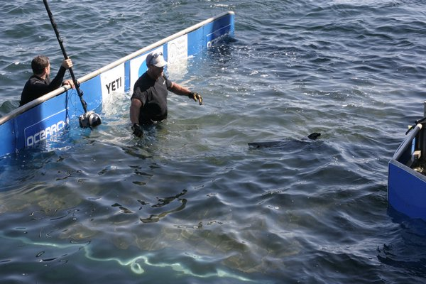 took a batter of biological samples and affixed satellite tracking tags to its fins before setting it free. Michael Wright