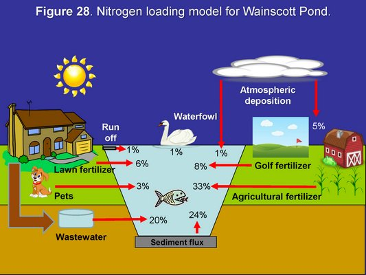 The variety of sources of nitrogen in the waters of Wainscott Pond. Simon Kinsella