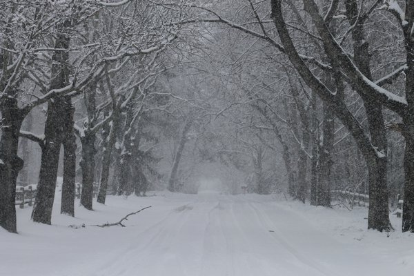 Snow falls on Alden Lane on Quiogue on Monday afternoon. KYL